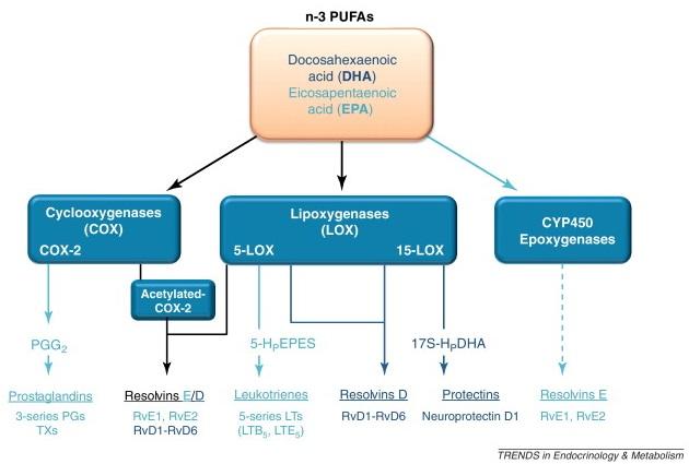 Vai trò của acid béo Omega-3 – tiền chất tạo Eicosanoid 3 1