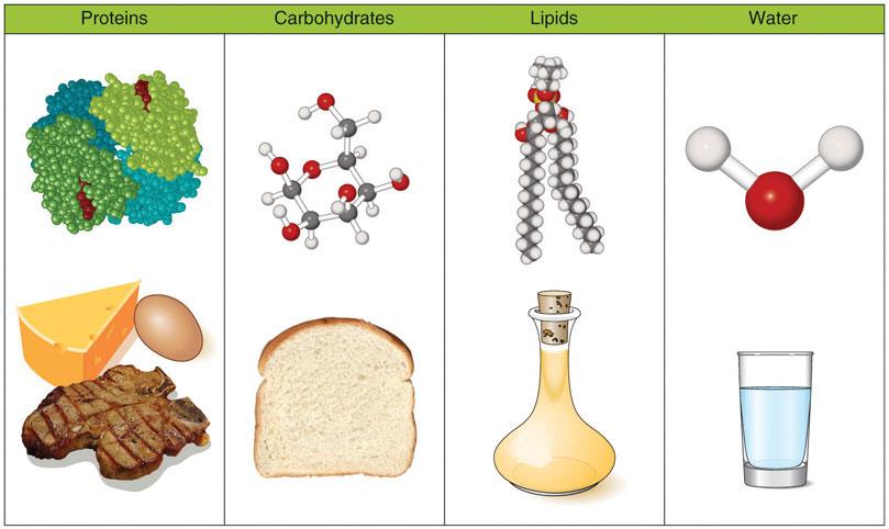 Nhu cầu năng lượng, Protein và Lipid trong thời kỳ mang thai 1