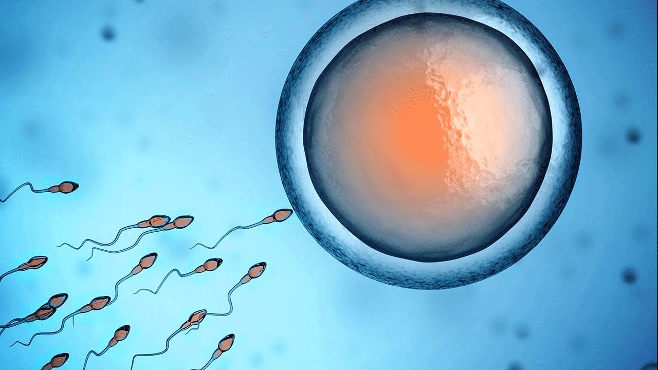 Tác dụngcủaDHA và EPAđối với khả năng sinh sản 1