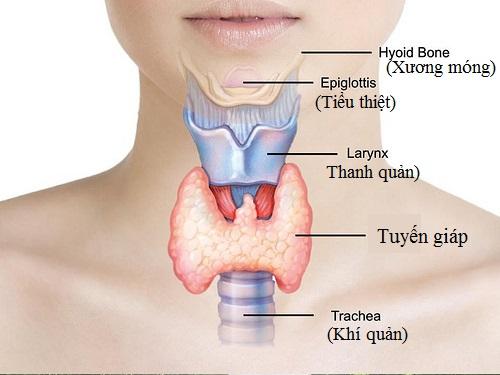 Vai trò của tuyến giáp và bệnh lý thường gặp 1