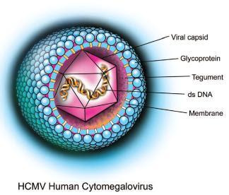 2. Nhiễm trùng Cytomegalovirus (CMV) 1