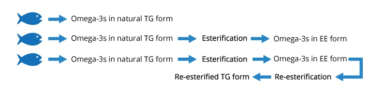 Bổ sung Omega-3 cho bà bầu, phải chọn dạng Triglyceride 1