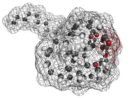 3.Dầu cá dạng Triglycerid hay dạng Ethyl Ester 1