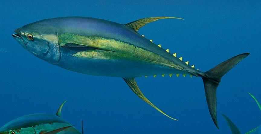 Cần lưu ý gì khi bổ sung cá vào thực đơn cho bà bầu? 1