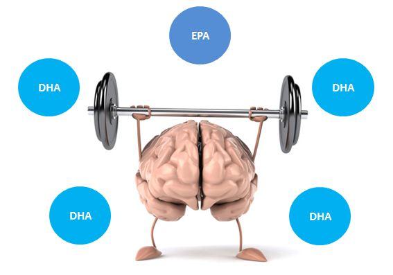 2. Hàm lượng DHA đạt từ 100-200mg và tỉ lệ DHA/EPA khoảng 4/1 1