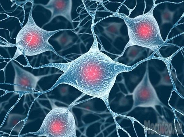 Sự phát triển não bộ của thai nhi 1