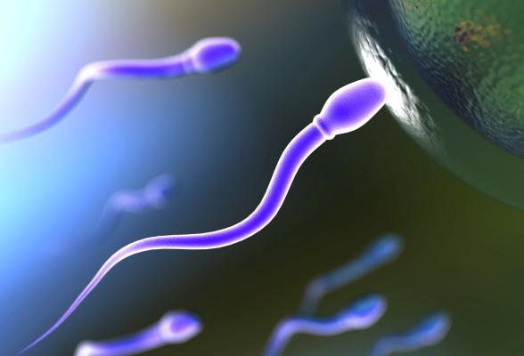 Vô sinh nam – dấu hiệu, nguyên nhân, điều trị 1
