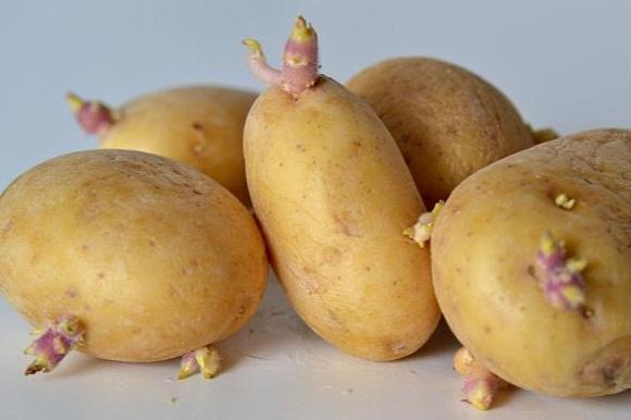 Những loại rau củ không nên ăn trong 3 tháng đầu mang thai 1