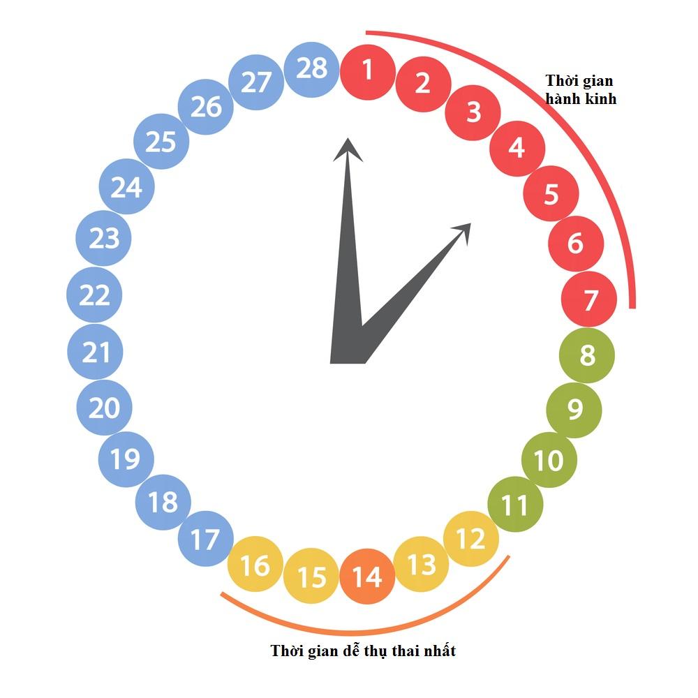Thời gian thụ thai là bao nhiêu ngày ? 1