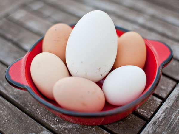 Ăn 7 trứng ngỗng sẽ sinh con trai, ăn 9 trứng ngỗng sinh con gái? 1