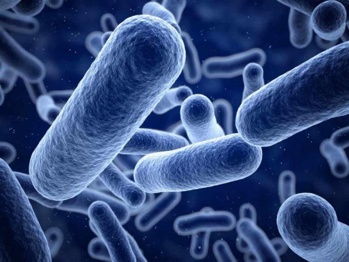 Vi khuẩn Listeria 1